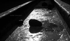 Freddi contrasti (iSergioP) Tags: ice stone torino bn fontana freddo ghiaccio reggia ghiacciato veneria sergiopignatelli