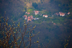 """Spring Buds and Mountain Towns • <a style=""""font-size:0.8em;"""" href=""""http://www.flickr.com/photos/55747300@N00/6650274423/"""" target=""""_blank"""">View on Flickr</a>"""