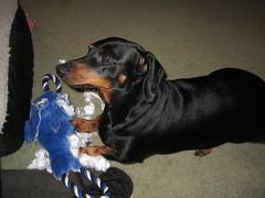 dogtoy jimmydean toydestruction