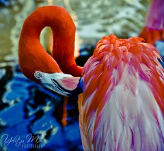"""The Contortionist"" (Yelitza Marie) Tags: blue nikon bright flamingo flamingogardens d7000"