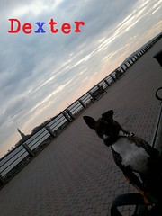 "Dextie • <a style=""font-size:0.8em;"" href=""http://www.flickr.com/photos/73968363@N02/6676734479/"" target=""_blank"">View on Flickr</a>"