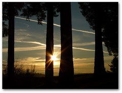 Four Trees (Oh Kaye) Tags: trees clouds oregon sunrise portland four picnik sunflare mttabor odc1 112in2012 88silhouette