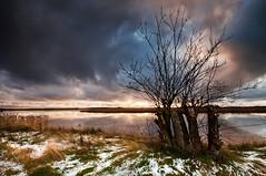 Kanikenset (- David Olsson -) Tags: winter sunset lake snow cold nature water grass clouds reflections landscape bush nikon december cloudy sweden branches sigma karlstad 1020mm 1020 vnern heavysky vrmland 2011 lakescape d5000 scenicsnotjustlandscapes kanikenset davidolsson kanikenshamnen 2exposuremanualblend ginordicjan12