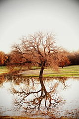 View from the Side of the Road (stephmull) Tags: winter reflection tree radlab 3651for2012