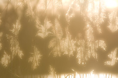 IMG_1283 (justfordream) Tags: sun backlight evening sonne gegenlicht abends