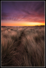 Path To The Light (greyridge) Tags: orange sunrise sand purple dunes northumberland marramgrass seatonsluice