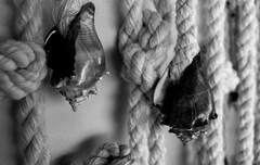 secrets caracoles (Ingdcardenas) Tags: sun sol maya sony yucatan catedral iglesia sombra playa bn amanecer cruz merida nena caracoles ocaso secrets eduardo mayas caracol salina 2012 artesania personaje huatulco alebrije seora principiante meztiza d5100