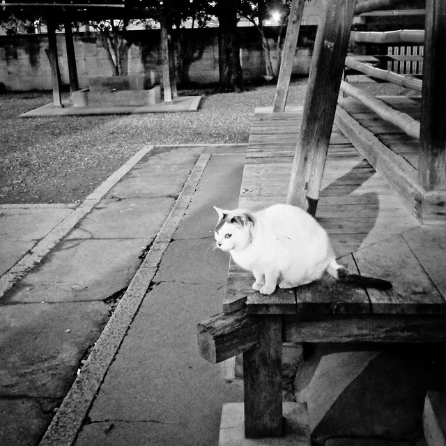 Today's Cat@2012-01-23