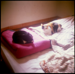 Pi + Bi (a.ninguem) Tags: 2 cats 6x6 cat square fuji piano chrome gato lubitel medium format filme cromo gatas bixiga reversível