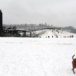 A happy leap! Rosie frolicking on the snow in her dog sweater with black fringed scarf, the big hill, Gas Works Park, Seattle, Washington, USA thumbnail