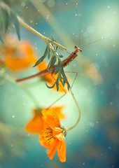 chill (twomeows (away...)) Tags: orange snow macro nature rain canon mantis insect bokeh dream 100mm chill 50d