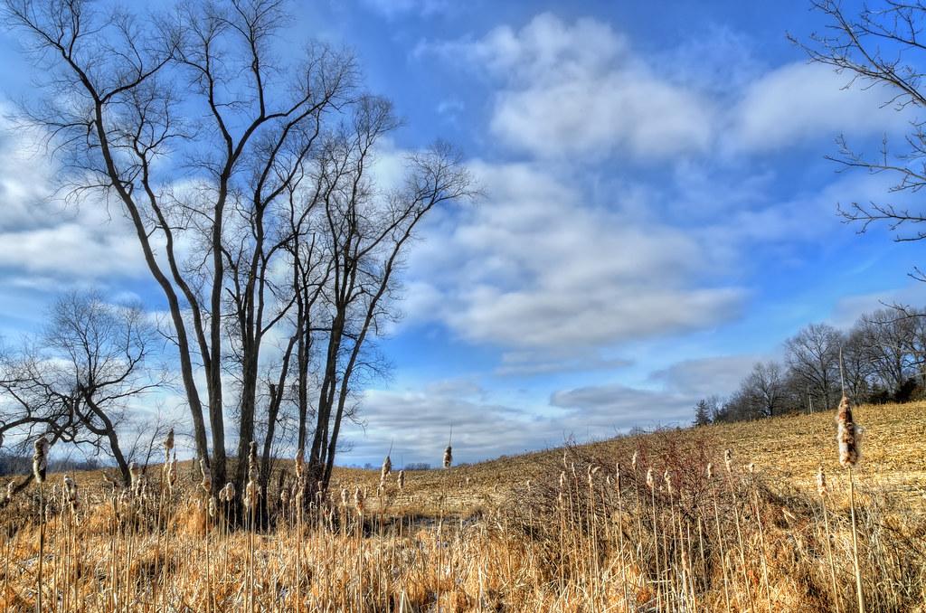 Winter landscape in Waterloo Recreation Area