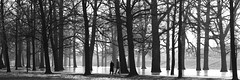 Walking the naked woods. (sirwoodland) Tags: winter cold ice canon blackwhite frost zwart wit deventer kou ijs 2470mm 5dmkll