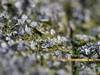 -12 Grad 03.02.2012