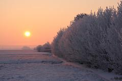 Winter 2012 (Pepijn Hof) Tags: morning winter light snow holland colour nature field sunrise canon landscape licht pastel horizon nederland natuur fields 18 tamron polder zon roze koud zuidholland haastrecht rijp vlist southholland stolwijk 40d zonsopgnag bilwijk