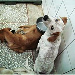 『壽山收容所』非展示區0204,狼犬、秋田、米格魯、各式傷犬、米克斯成幼犬、現場為準,20120206 thumbnail