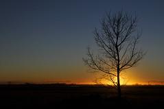 Day's Over (jan lyall) Tags: sunset tree calgary night alberta jans d300 micarttttworldphotographyawards micartttt michaelchee