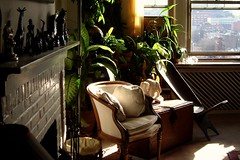 rest easy (omoo) Tags: windows art chair fireplace apartment interior antiques greenplants cityviews clubchair earlyafternoon animalfigures resteasy buffalosculpture africanchair whitebrickfireplace