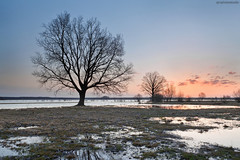 silent morning (Qba from Poland / qmphotostudio) Tags: morning sky reflection tree nature water sunrise spring outdoor poland polska backwaters qba podlasie qbafrompoland