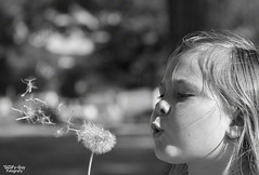 Dandelion Wishes (Goofy-Guy) Tags: dandelion wishes girl bw
