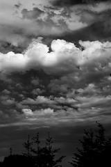 before the rain (mkk707) Tags: nikond100 cosina voigtlnderultron40mmf2sliiasph sony icx413aq ccd sensor clouds blackwhite