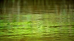 Mangrove Reflections Borneo Indonesia DSC_3904 (JKIESECKER) Tags: people brown green animals sumatra indonesia wildlife borneo biodiversity indigenouspeople tropicalrainforest tropicalforest peopleandnature tropicalbiodiversity