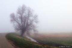2015-03 Natuurlijk schoon in de mist (Vierpolders/NLD) (Meteo Hellevoetsluis) Tags: mist netherlands fog nederland polder landschap meteo specials 0311 maart zuidholland regionaal 2015 nld voorne bewolking voorneputten collecties vierpolders provinciezuidholland iphone4s mnd03 lenteseizoen