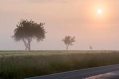 Drei Bäume (webpinsel) Tags: dülmen frühling landschaft morgensonne morgenstimmung münsterland natur nebel sonnenaufgang morgens