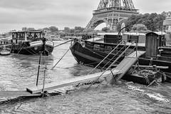 Paris under Water - June 2016 (marianboulogne) Tags: blackandwhite bw paris france water monochrome seine river mono flood noiretblanc eiffeltower pary francja powd