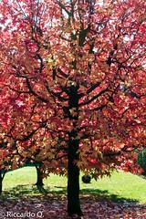 _DSC8119.jpg (Riccardo Q.) Tags: foglie alberi autunno altreparolechiave