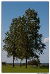 T(h)ree in one (Dirk Drijfhout) Tags: sky lake three bomen lucht picnik ijselmeer vooroevergras