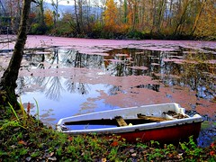 forgotten fishing-boat (mujepa) Tags: pink autumn water rose automne reflections pond eau mare lac retreat forgotten rowboat corny fishingboat retired lorraine reflets barque tang moselle oubli retraite doubleniceshot mygearandme musictomyeyeslevel1 bbng rememberthatmomentlevel1 rememberthatmomentlevel2
