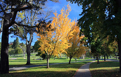 Ginkgos Aflame (LifeLover4) Tags: landscape hike cemetery oakland mtview park california autumn fall canon t2i 550d stickneydesign lifelover4 efs1755mmf28isusm circularpolarizer ginkgobiloba ginkgo ginkgoes grave graveyard yellow blue green tomb tombstones crypt hiking nature outdoors usa hughstickney