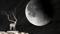 Dream of flying to the Moon (Bluemonkey08) Tags: moon bondi blackwhite sydney australia dreaming deer nsw sculpturebythesea 2011 samyang nikon80200mmf28afd ericlam d7000 bluemonkey08 nikond7000 rokinon85mmf14