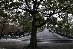 Tree&Stair (elmar35) Tags: street japan tokyo sigma dp1 dp1s