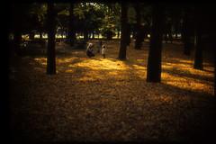 secret garden (R.Hossssy) Tags: leica film tokyo f10 velvia fujifilm noctilux 135 fujichrome m7 velvia50 iso50 rvp50