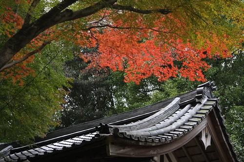 美しい景色 / Beautiful Japan