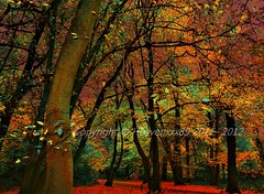 .*`* where the angels Dwell *`*. (~~Heavenxxx89 Art & Photography~~Busy) Tags: autumn trees fall nature forest landscape scenery seasons highgatewoods englishautumn mygearandme mygearandmepremium nikond3100