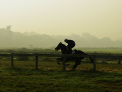 First Light....... (Dipanjan Roy) Tags: winter horse mist colour fog race dawn freedom nikon focus energy raw run harmony jockey passion pan nikkor rgb racecourse stallion racehorse thoroughbred p90 gallop firstlight manandbeast chestnuthorse fullgallop nikonp90