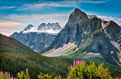 Fireweed & The Rockies (nailbender) Tags: snow canada mountains ice forest glacier alberta wilderness fireweed canadianrockies nailbender mtbable bidentmountain