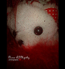 (Nourah Almajaishy) Tags: bear love gift   nourah    almgishy