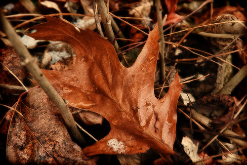 Dead Leaves No.1 (365-352)