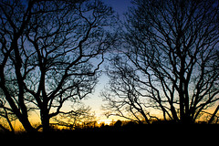 Dusk (fotosiris) Tags: uk trees winter sunset england sky sun canon eos britain dusk 28mm surrey guildford 550d
