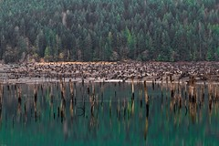 Lake Cushman Morning (Dalo2013) Tags: lakecushman hoodcanal olympicnationalforest staircaserapids