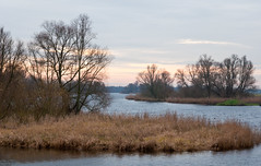 Dutch National Park De Biesbosch in winter (RuudMorijn) Tags: park morning travel autumn trees winter light wild sky lake plant holland reflection tree green fall reed nature water netherlands ecology dutch grass yellow clouds rural forest river season landscape outside outdoors countryside pond bomen flora scenery colorful europe quiet peace view natural outdoor pastel background bare herfst scenic reserve peaceful nobody scene calm foliage national silence environment serene picturesque idyllic kale brabant tranquil atmospheric biesbosch noordbrabant werkendam northbrabant kleurig nationaal natuurpark brabantse