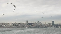 Istanbul#1 (bass_nroll) Tags: city winter sea sky panorama public ferry skyline canon turkey boat asia europa europe nuvole mare seagull capital transport flight istanbul volo cielo bosphorus gabbiano galata traghetto turchia kadky beyolu eminn beikta metropoli 450d transporttion strenella bosfprp landscapemoltitudine