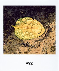 """#dailypolaroid of 26-12-11 #fb #88 • <a style=""""font-size:0.8em;"""" href=""""http://www.flickr.com/photos/47939785@N05/6589356267/"""" target=""""_blank"""">View on Flickr</a>"""