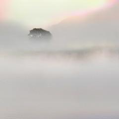 """quietly"" (helmet13) Tags: d300s raw landscape lake fog mist tree nature aoi bestcapturesaoi platinumpeaceaward platinumheartaward platinumheartshalloffame studies heartaward world100f 200faves simplicity"