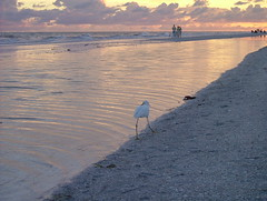 "Snowy Egret at Sand Pointe's Beach • <a style=""font-size:0.8em;"" href=""http://www.flickr.com/photos/43501506@N07/6613771305/"" target=""_blank"">View on Flickr</a>"