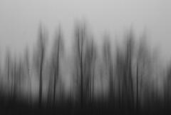 Through the fog (Palentino) Tags: trees bw white black byn blanco fog movement arboles negro foggy experiment movimiento niebla nava experimento palencia bruma lagunadelanava fuentesdenava